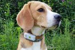 Weenect Collier GPS pour chien